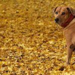 Собаки осенью