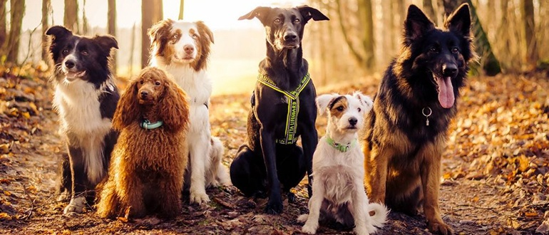 Собаки осенью. Как подготовить собаку к осени. Выгул собак осенью. Чего остерегаться хозяину собаки и как поддерживать собаку в тонусе в осенний период. Когда купать собаку осенью. Фото собак осенью