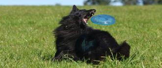 Фрисби для собак (Дог-Фрисби)