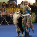 Фристайл танцы с собаками. Кинологический фристайл. Фристайл с собаками обучение