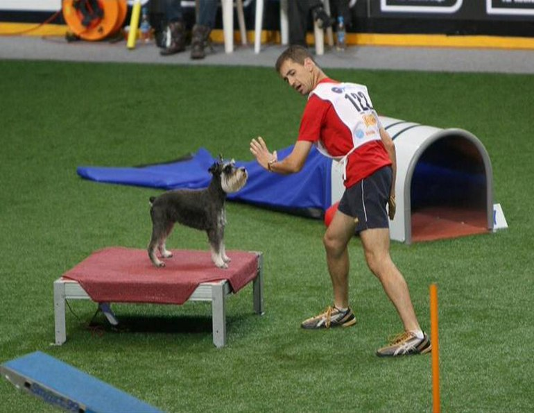Аджилити для собак: фото, правила аджилити, классы, препятствия. Соревнования собак по аджилити. Снаряд для аджилити подиум