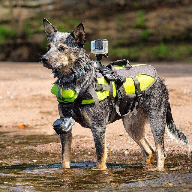 Виды шлеек для собак