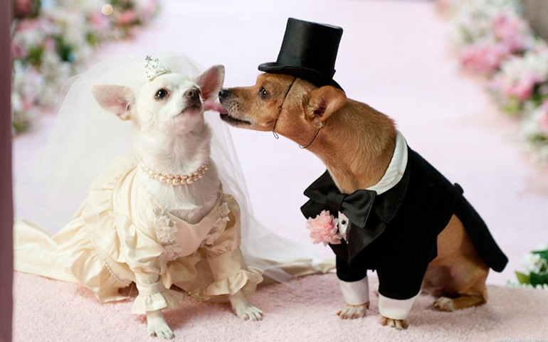 фото собак в одежде