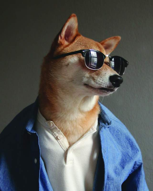 Фото собак в одежде и очках