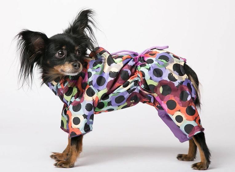 Одежда и обувь для собак: зимняя, осенняя и вязаная одежда для собак