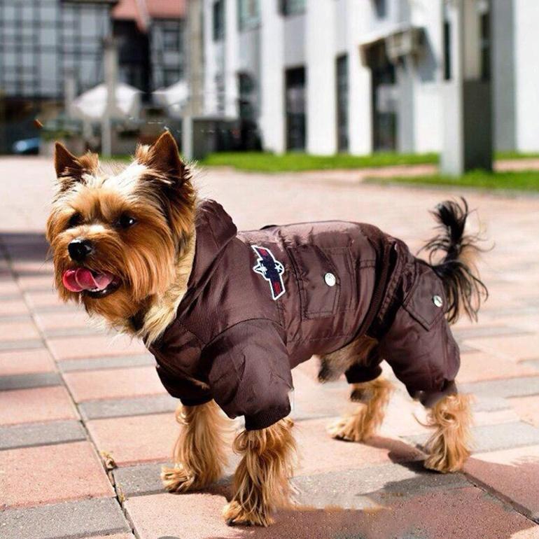 Одежда и обувь для собак: как правильно снять мерки и пошить своими руками