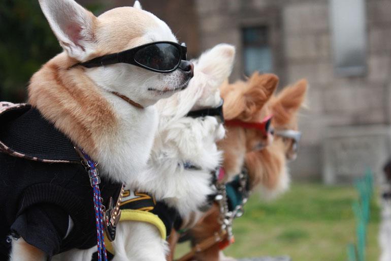 Летняя декоративная одежда для собак
