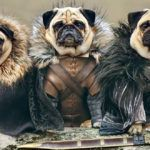 Одежда и обувь для собак: как правильно снять мерки и пошить одежду для собак своими руками