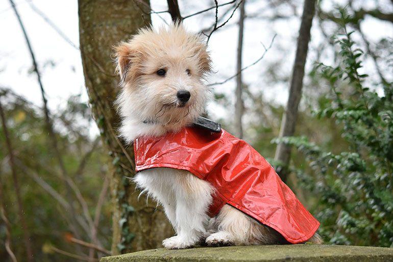 Осенняя одежда для собаки