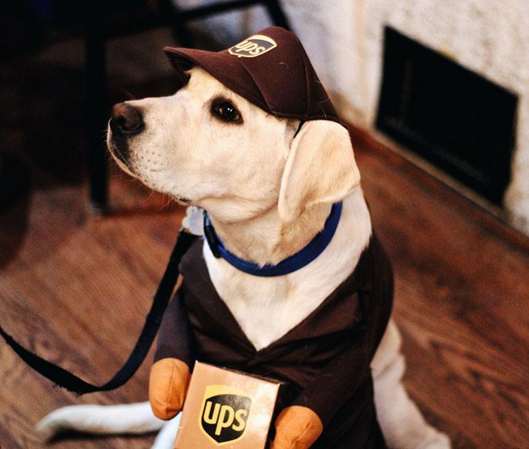 Одежда для собак: своими руками и как выбрать в интернете