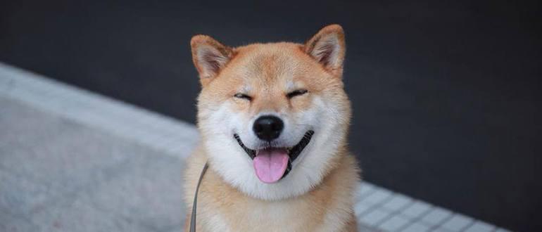 Уход за зубами собаки в домашних условиях