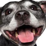 Молочные зубы у собак: когда у собак меняются молочные зубы