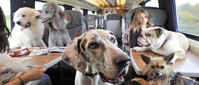Правила перевозки собак в поезде по россии