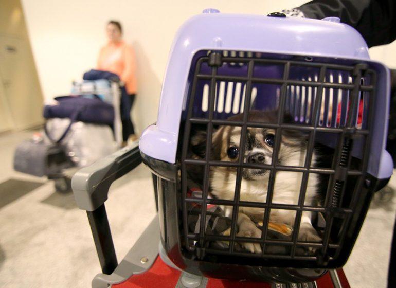 Правила перевозки собак в поездах дальнего следования
