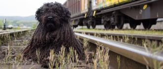 Правила перевозки собак в поезде
