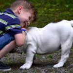 Собака для квартиры и ребенка