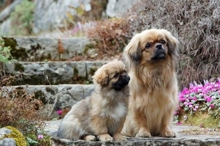 Маленькие породы собак для квартиры и ребенка