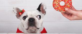 Можно ли собакам сладкое