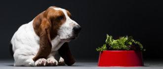 Какие овощи можно давать собаке