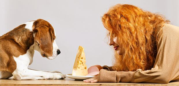 Можно ли давать собаке сыр