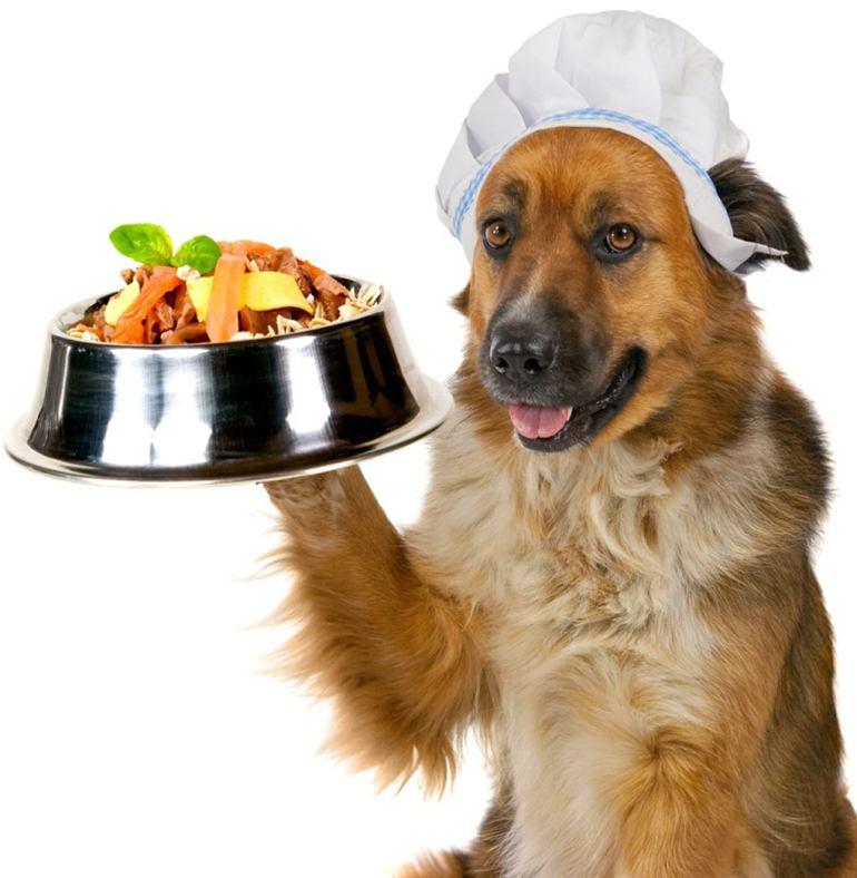 Какие каши можно давать собакам мелких пород