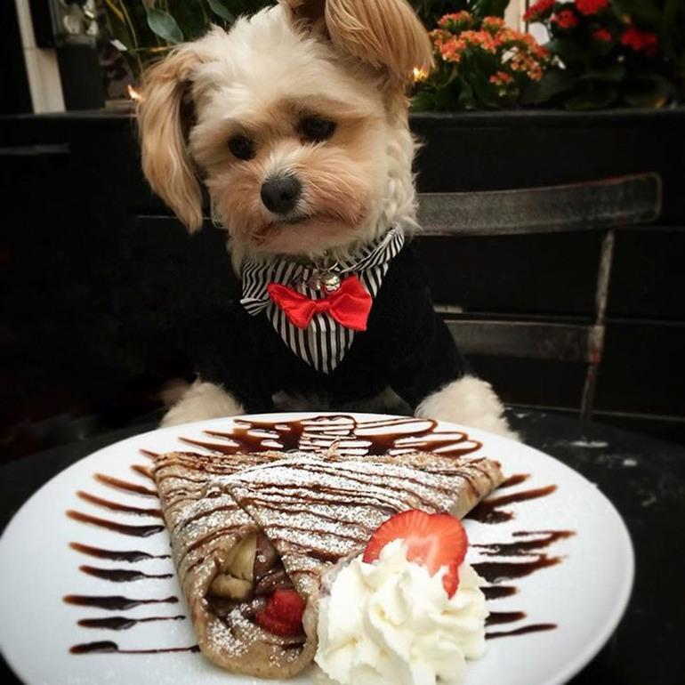 Можно ли собакам давать сладкое