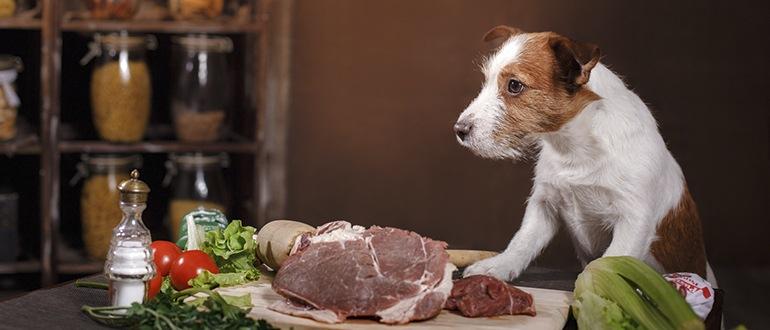 Можно ли собакам сырое мясо