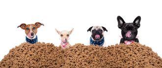 Как кормить собаку сухим кормом