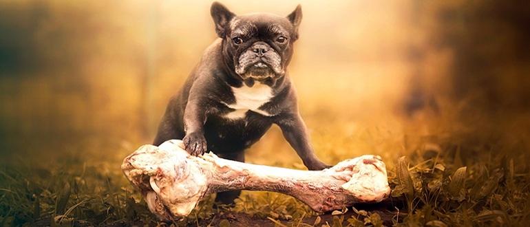 можно ли давать собакам кости