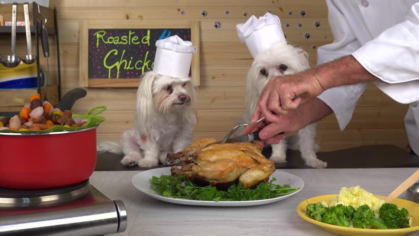 Натуральное питание для собак