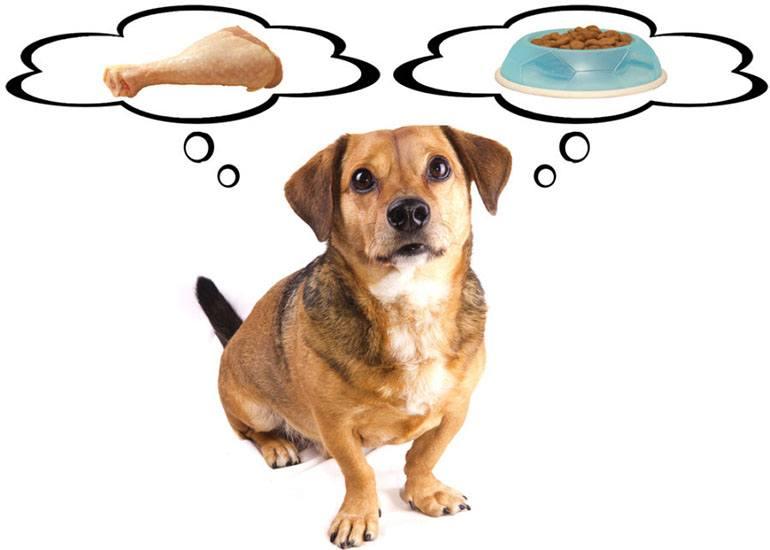 Чем лучше кормить собаку: сухим кормом или натуральным