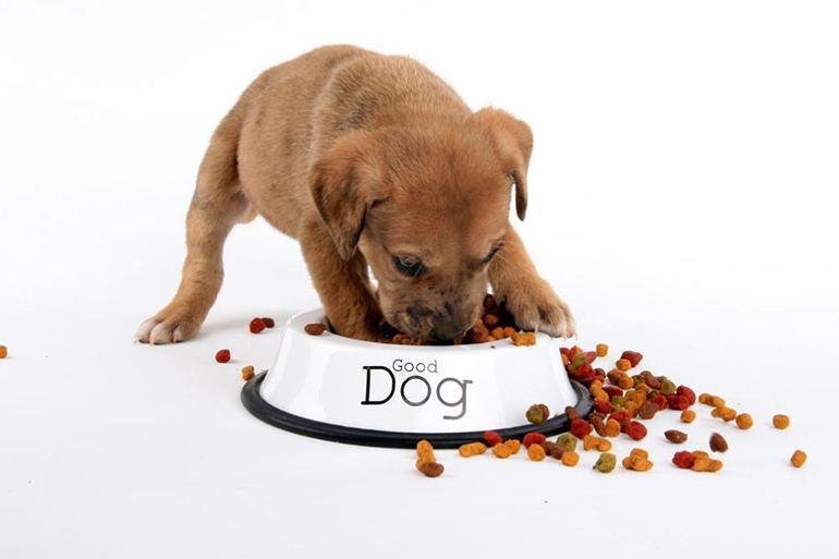 как выбрать корм для собаки