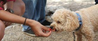 Чем лучше кормить собаку