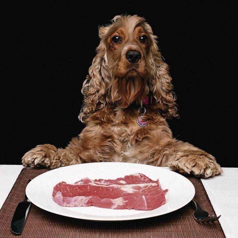 можно ли кормить собаку сырым мясом