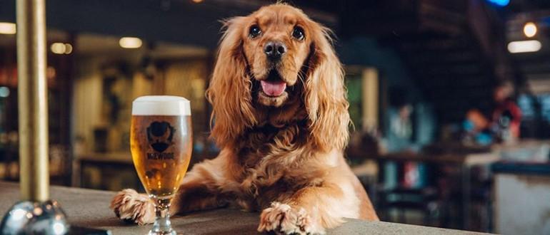 Можно ли собакам алкоголь