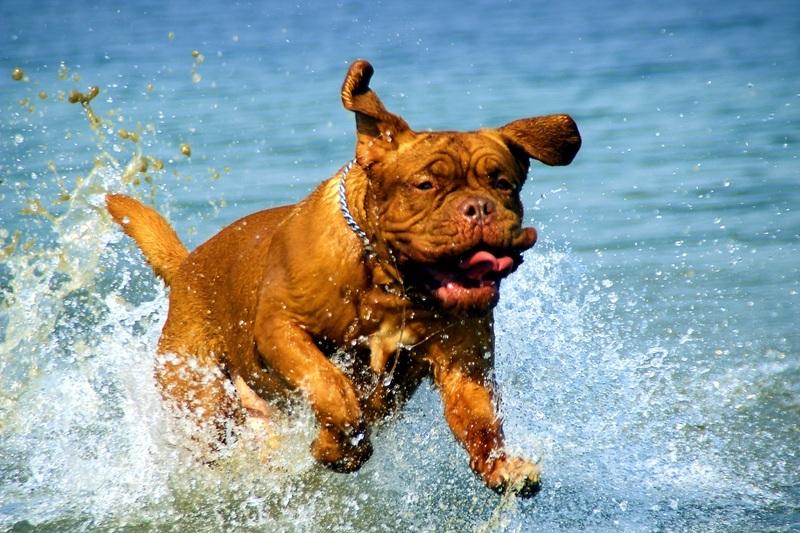 Гигиена у собак