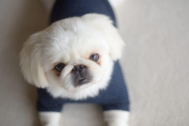 Виды стрижек у собак