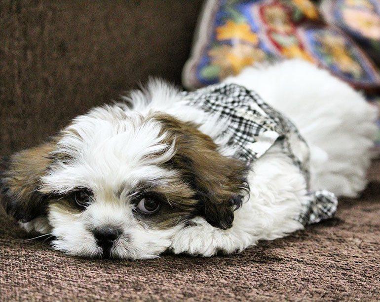 Модельная стрижка у собаки