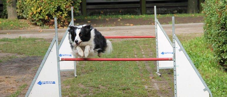 Флайбол для собак
