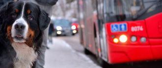 Как перевозить собаку в общественном транспорте