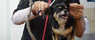 Как выбрать ножницы для стрижки собак