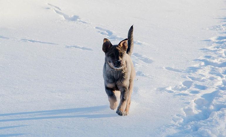 Собака гуляет зимой