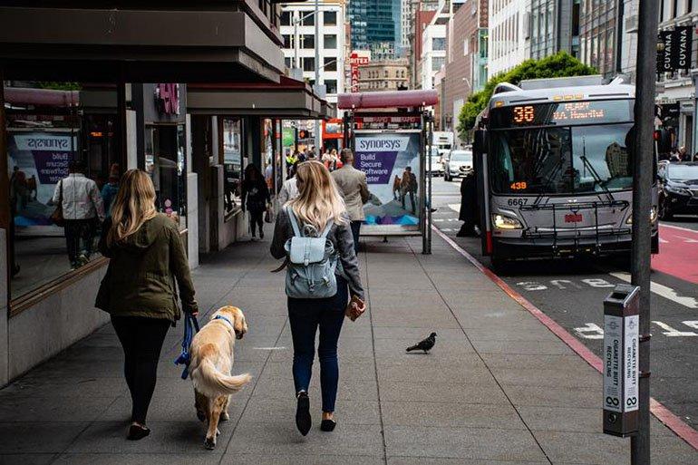 Собака и автобусы