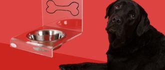 Как повысить аппетит у собаки