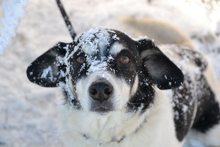 Как обезопасить собаку на новый год