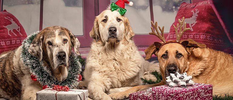 Что подарить собаке на новый год или день рождения