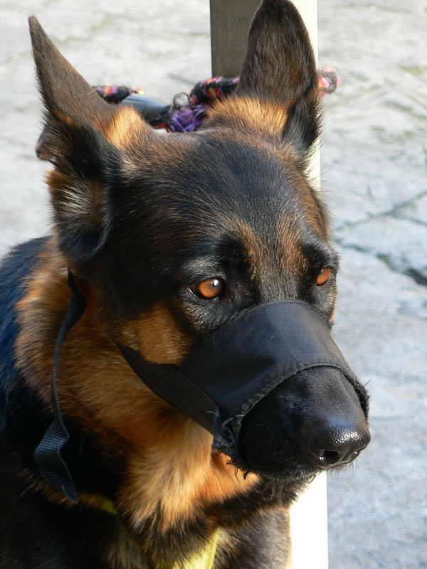Виды намордников для собак