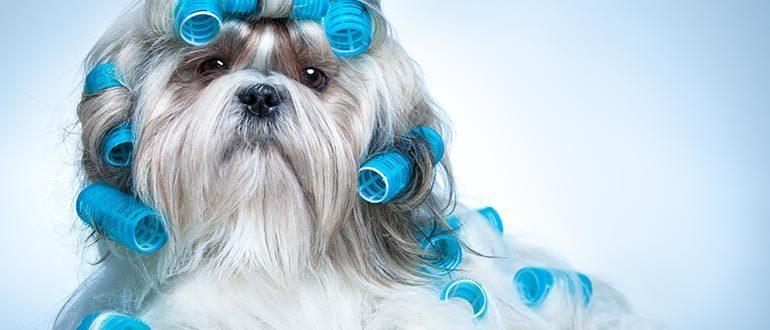 Груминг собак - что это такое и зачем он нужен