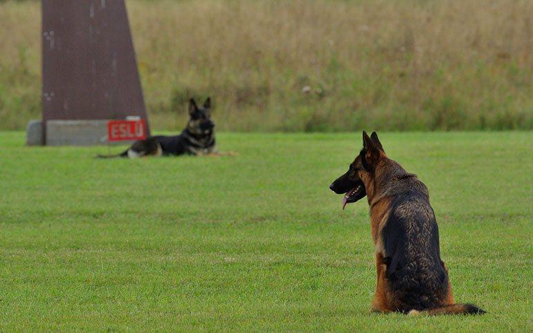 Совет касательно ОКД для собак